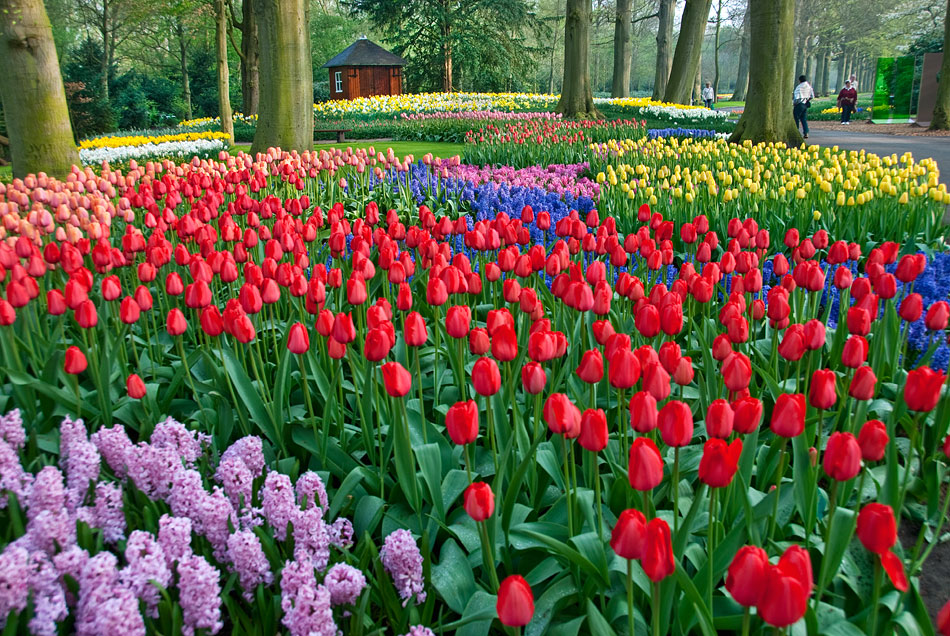 Keukenhof Gardens 2009 Photos Video