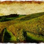 French Vineyard, Monein, France - Forgotten Postcard