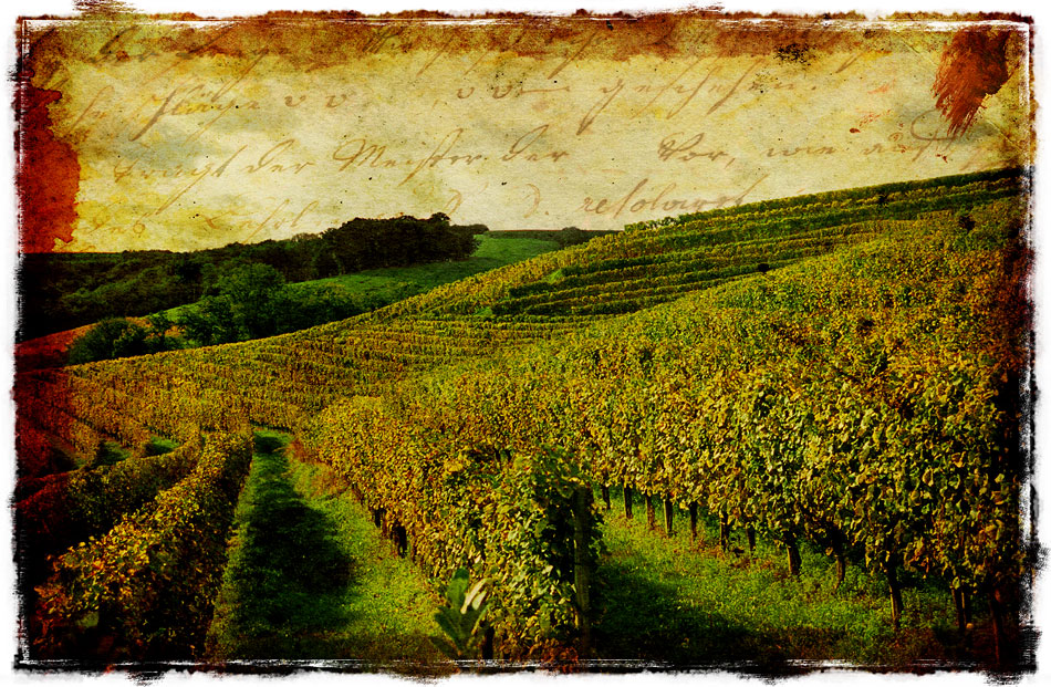 French Vineyard - Forgotten Postcard