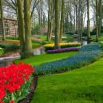Keukenhof Garden Stream