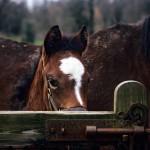 Shy Colt