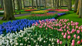 The Best Time to Visit Keukenhof Gardens