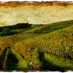 French Vineyard, Monein, France - Forgotten Postcard