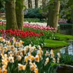 Tulips at Keukenhof Gardens 2009