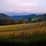 Vineyard in the Pyrenees