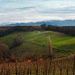 December Vineyard