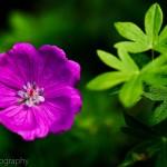 Tiny Purple Bloom