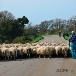 Traffic in Sardinia